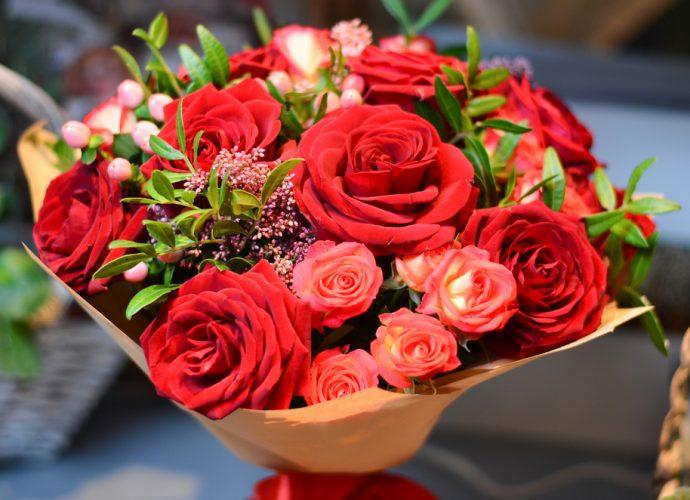 rose flowers